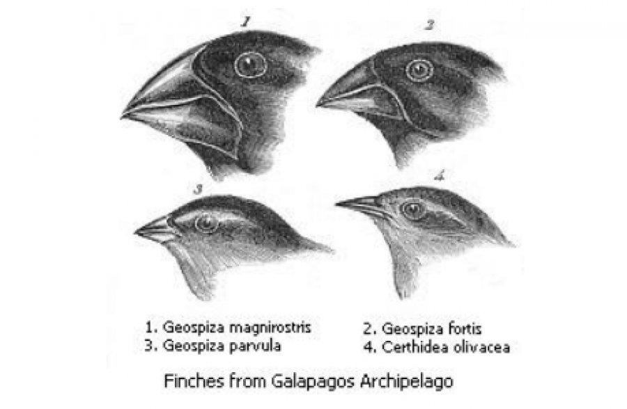 Taubsi, Schwalbini und Darwins Evolutionstheorie | Spielbar.de